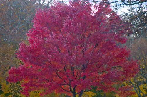 20130725172309-tree_2_sn