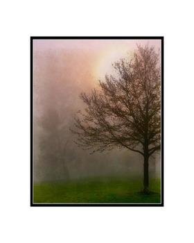 20130725172551-16x20_tree1__c_fs