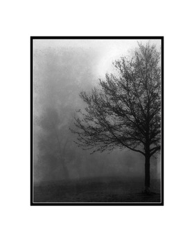20130725172743-16x20_tree1bws
