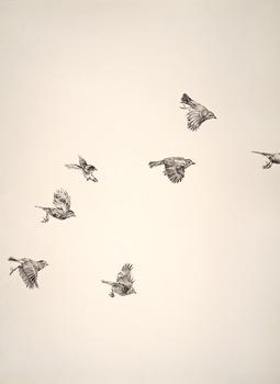 20130726134246-7birds_large