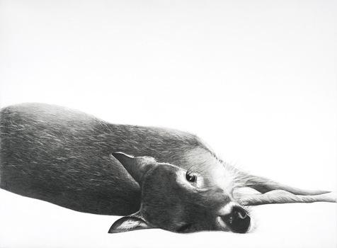20130726171612-deer