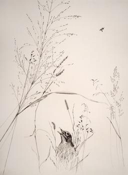 20130726172719-birdbeegrass_large