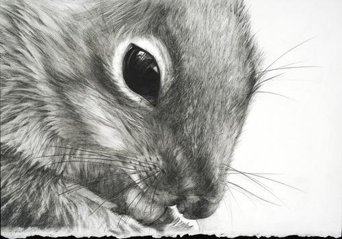 20130726172858-squirrel