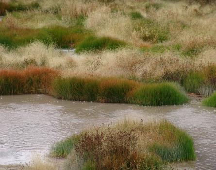 20130805015521-david-bechtol-mudvolcanograsses