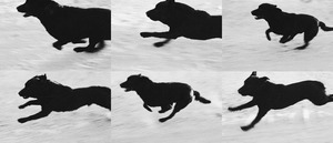 20130815181908-dog_sequence_1__10x_1_