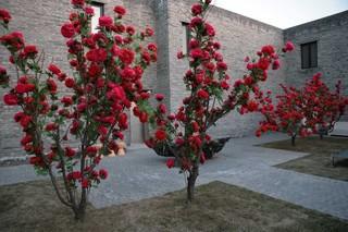 Winter_garden_choi_jeong_hwa5-s