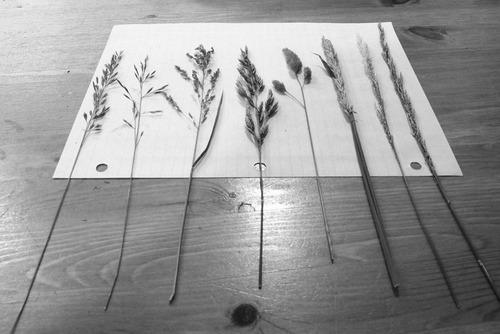 20130816085036-grasses