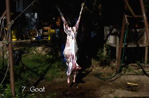 7_goat