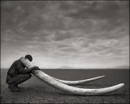 20130821142318-ranger_with_tusks_of_killed_elephant__amboseli__2011