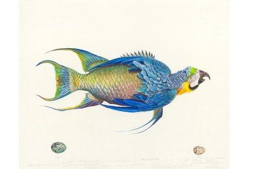 20130827011434-james-prosek-parrotfish