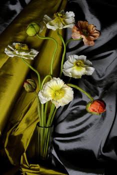 20130905160110-poppies_yellow_drape