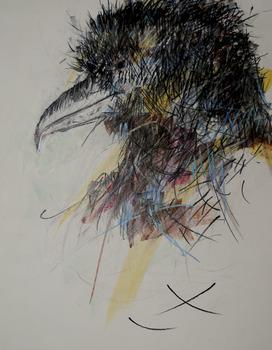 20130911051823-birding_series_alsakan_raven