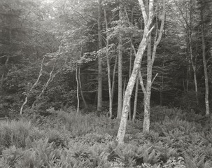 20130911194203-woods__port_clyde__me__1970
