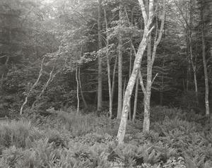 20130911194203-woods__port_clyde__me__1970