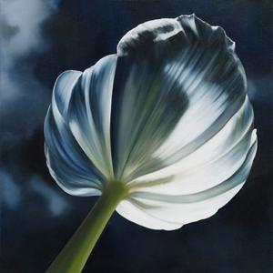 20130916152338-when_flowers_turn_their_backs_2000_x_2000