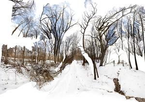 20130917141332-venables_winter_woods_2013_klein