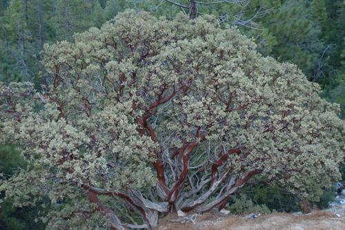 20130921014401-david_bechtol_canyon_flora