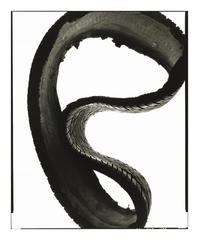 Hs_sauropod_08