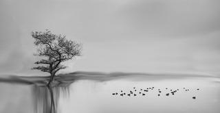 20130927175610-earl_veits_reflections__machado_lake