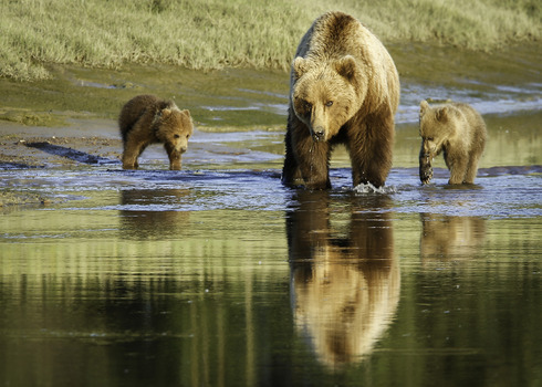 20130927180355-4beverlygates_bear_family_at_the_slough
