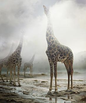 20130929012022-simen_johan-untitled-172-giraffe