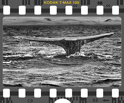 20131008091735-kod-t-max100-whalefluke