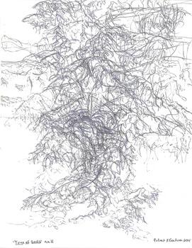 20131010024428-eustace-tree_11