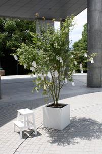 20131015055303-yoko_ono_wish_tree