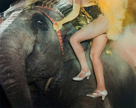 20131022234720-c-elephant-face-legs