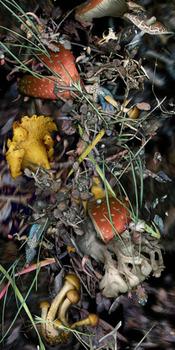 20131022235800-hg-mushroom-scroll