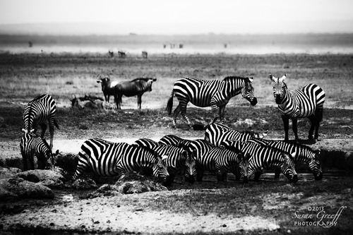 20131028154545-zebras-silhoutte_img_4214