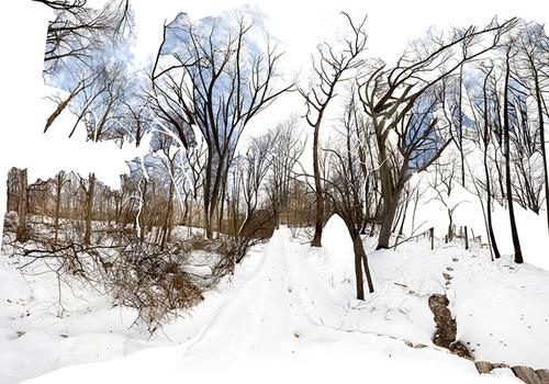 20131029162011-venables_winter_woods_2013_klein