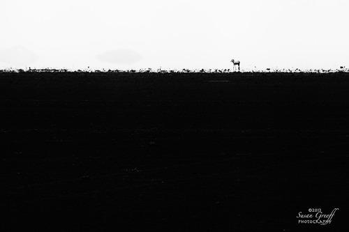 20131030093000-zebra_mirage_img_4112