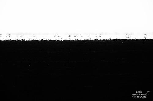 20131030093339-zebras_mirage_img_4116