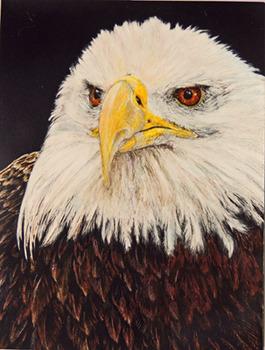 20131101163316-bald_eagle