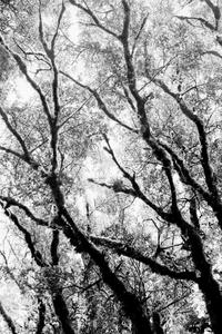 20131108194156-canopy_2011