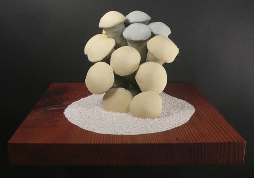20131119174729-stone_fungus