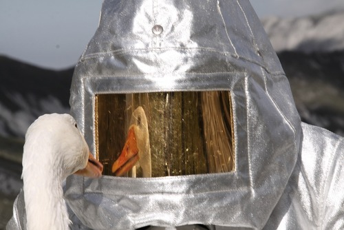 20131202141928-agnes_meyer-brandis_moon_goose_analogue__helmet_mirror_web