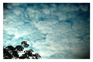 Tree_clouds