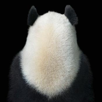20131214161639-tf0001_timflach-panda_back