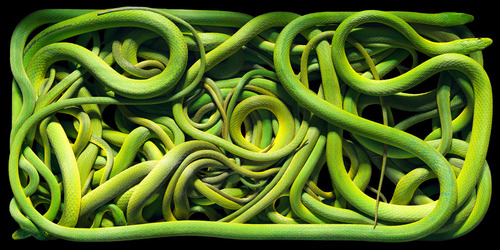 20131214161740-tf00007_timflach_green_snakes