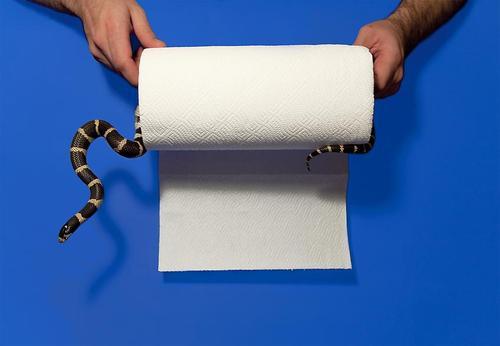 20131223075932-snakepapertowel_em5