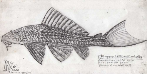 Eb58pterigoplictis_multiradiatus
