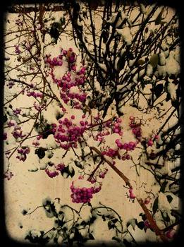 20140104192706-snowberriespa