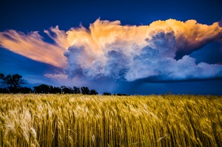 20140115202526-fields_of_glory