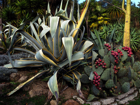 20140116045417-flora2