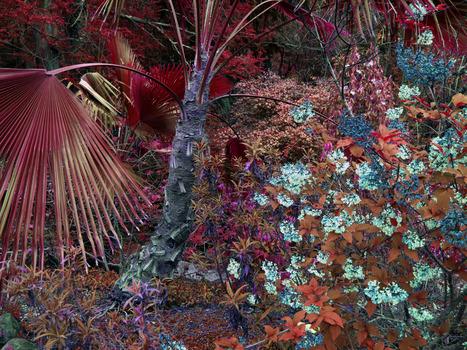 20140116045512-flora3