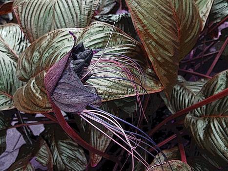 20140116050415-flora8