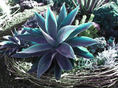 20140116051007-flora17