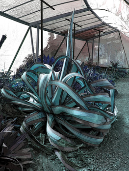 20140116051336-flora23